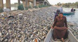مرگ ماهیها در فرات