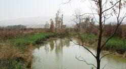 رود اردن